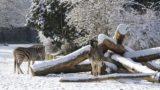 Im Zoo Heidelberg beginnt die Adventszeit – Weihnachtsmarkt am 26. und 27. November