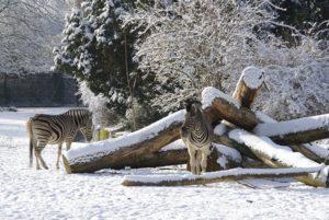 8120-winter2_kl