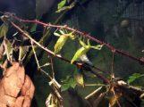 Eins, zwei, drei, vier… viele!  </br>Zoo startet artenreich ins neue Jahr