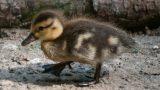 Osterspaß zum Mitmachen in der Zooschule – Hasen, Küken und alles rund ums Ei
