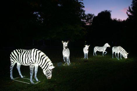 Heidelberger Zoo-Leuchten noch bis 29. November – Mit Aktion von Fody's